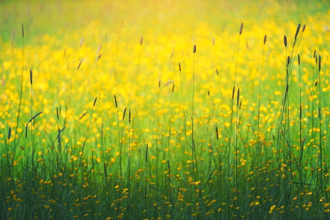 Meadow,Spring,Crop