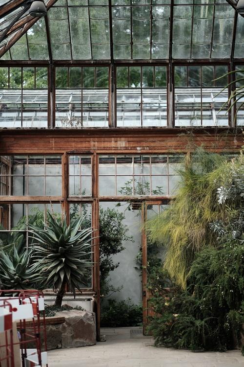 Plant,House,Tree