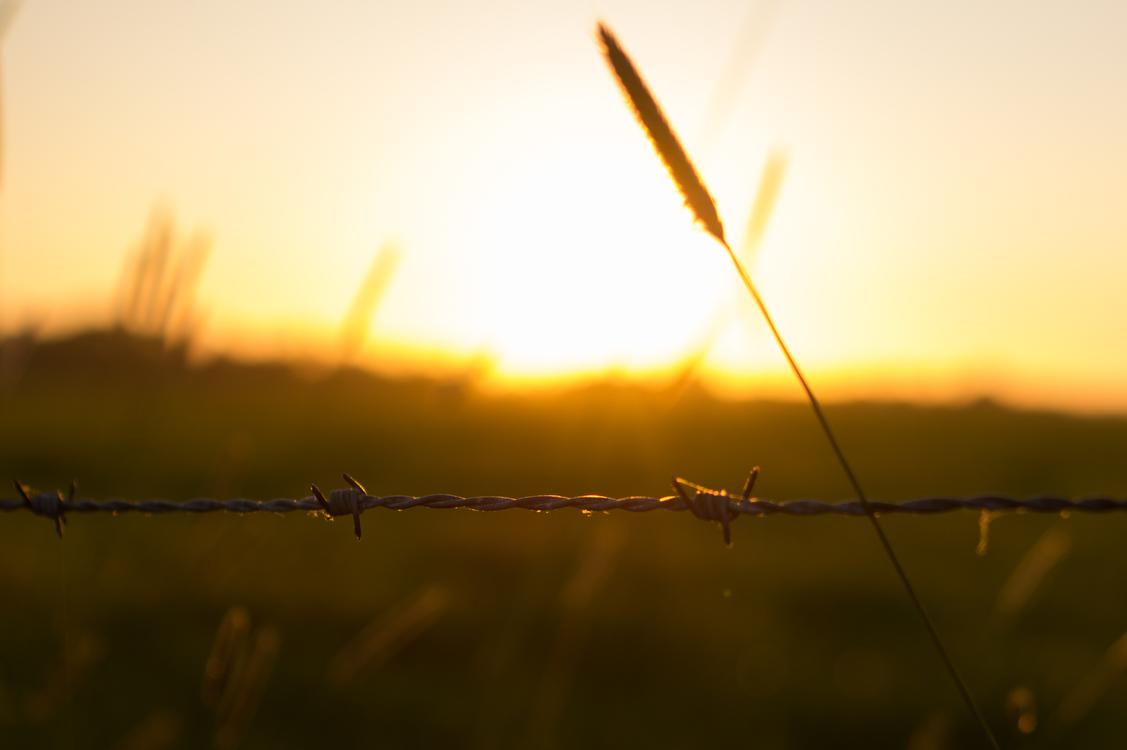 Atmosphere,Evening,Macro Photography