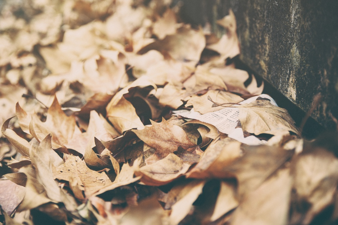 Autumn,Leaf,Desktop Wallpaper