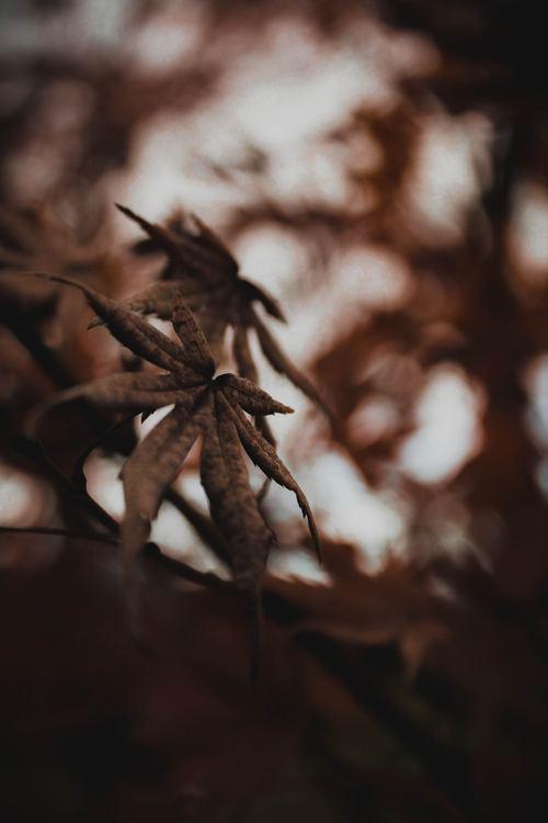 Leaf,Invertebrate,Insect