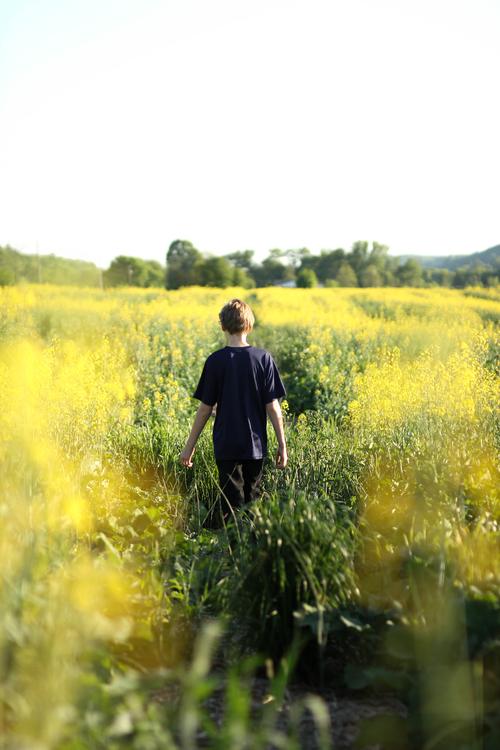Meadow,Canola,Spring