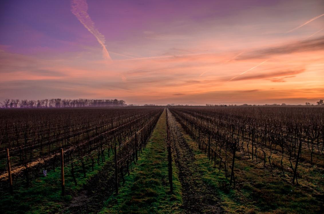 Plantation,Atmosphere,Evening