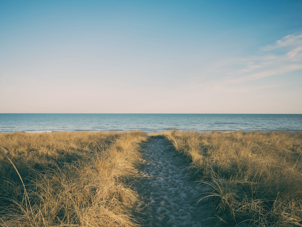 Grass Family,Grass,Sea