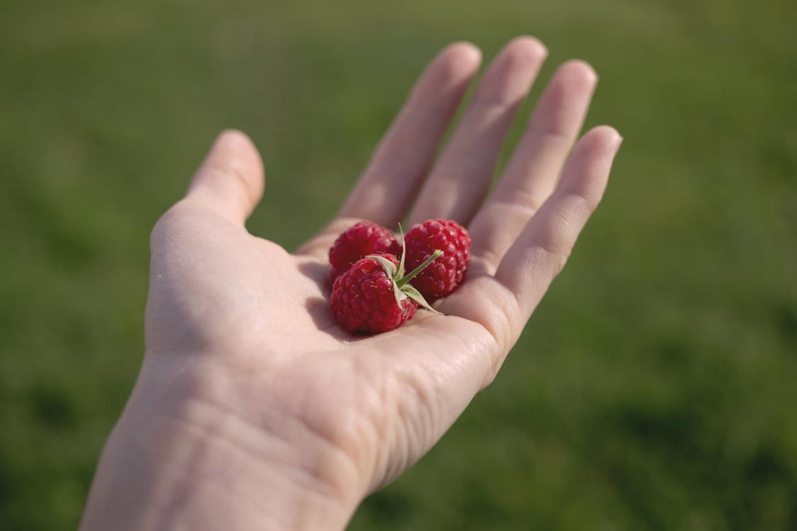 Close Up,Fruit,Hand
