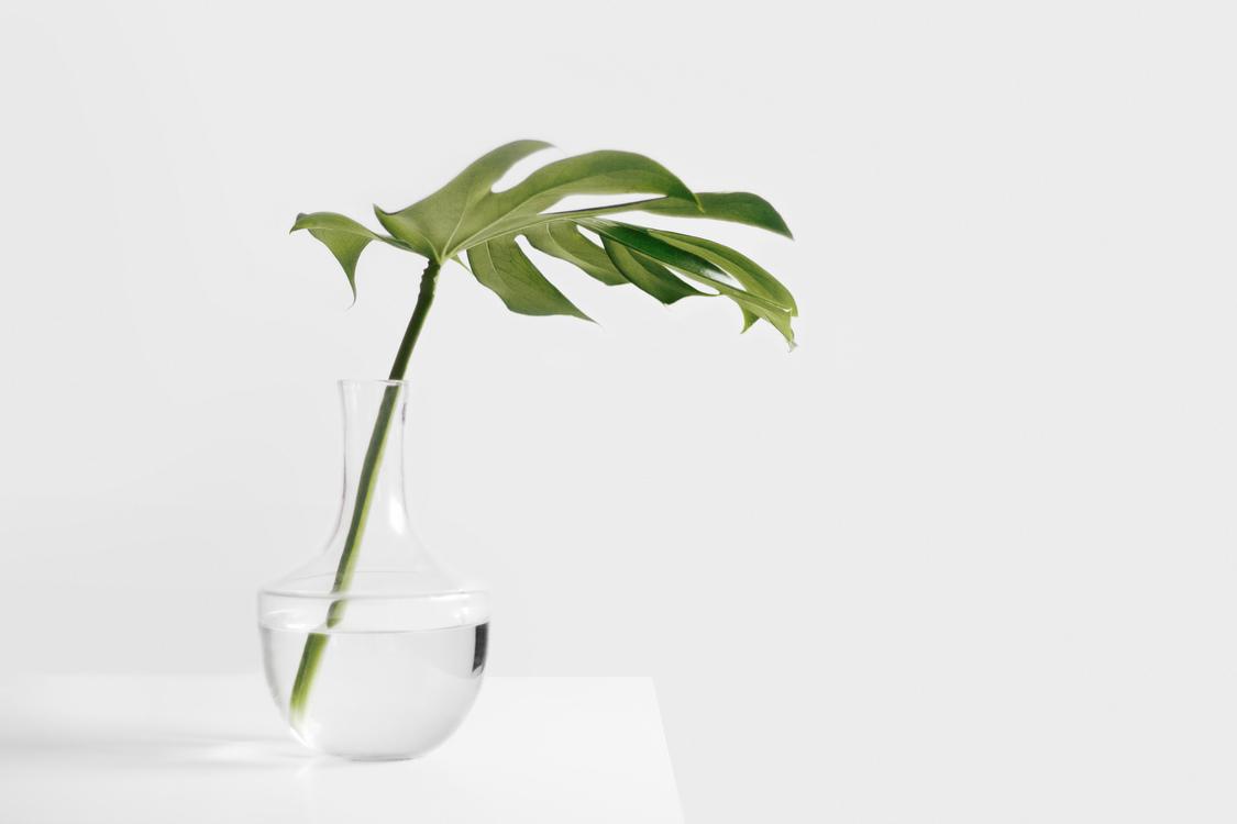 Plant,Leaf,Houseplant