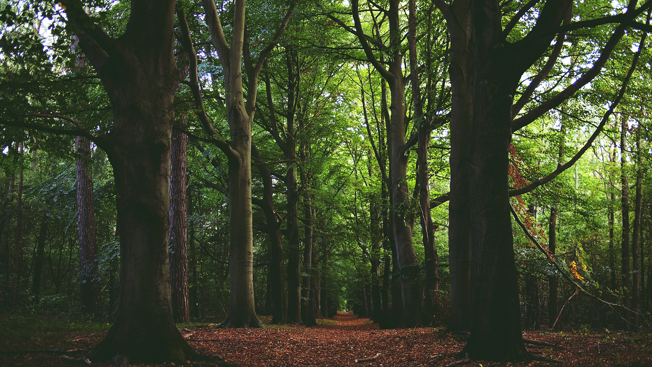 Northern Hardwood Forest Concept,Temperate Broadleaf And Mixed Forest,Spruce Fir Forest