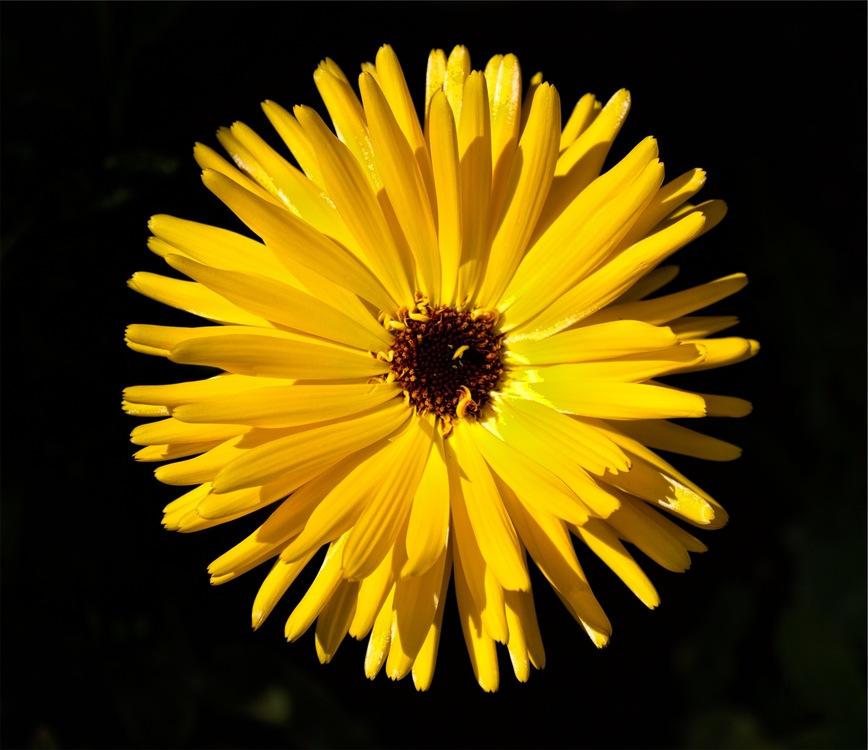 Daisy Family,Pollen,Flora