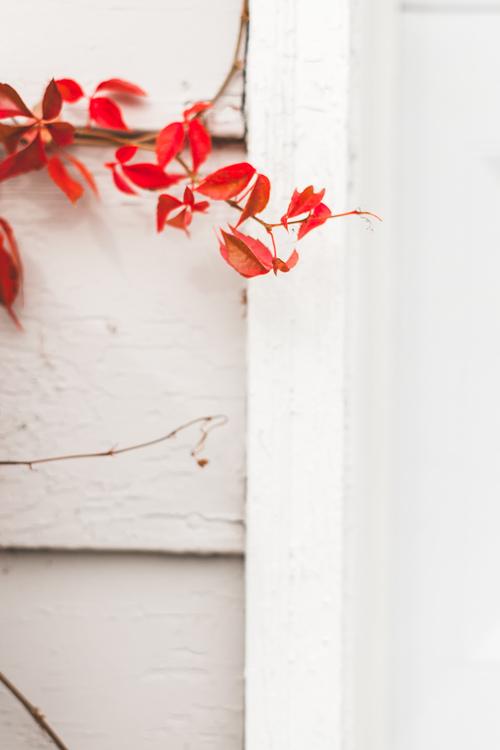 Twig,Petal,Flower