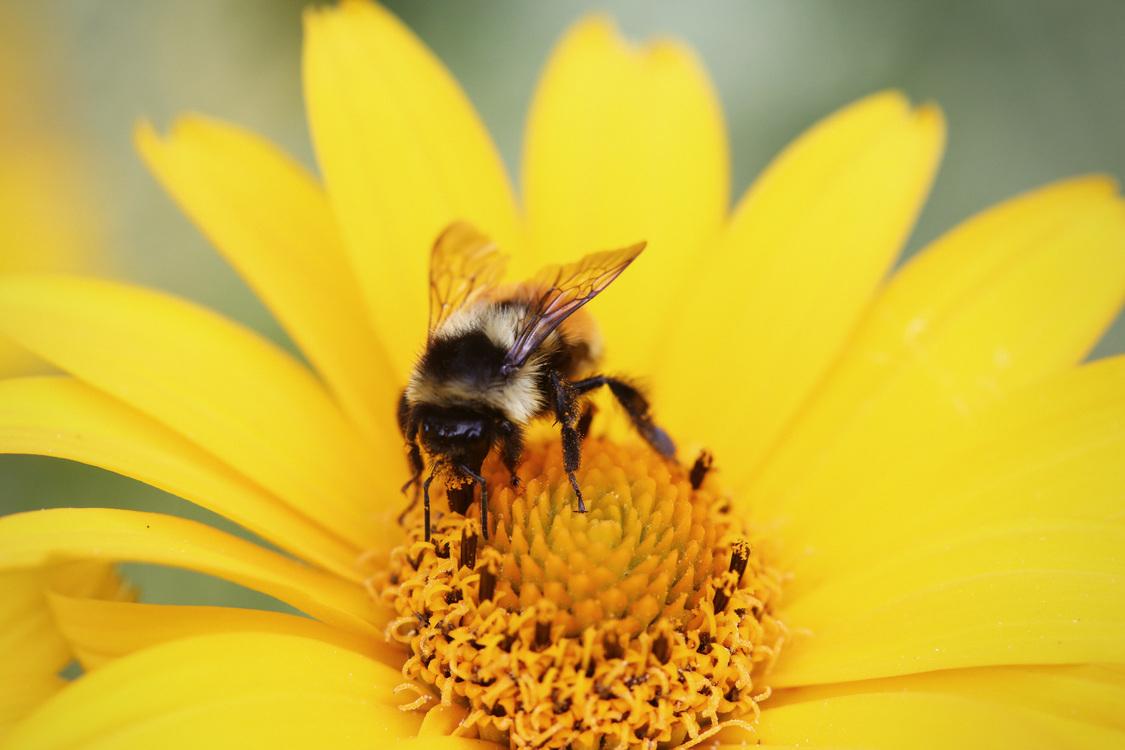 Pollen,Pollinator,Flower
