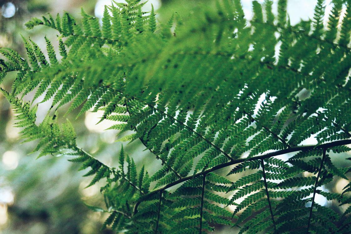 Evergreen,Biome,Plant
