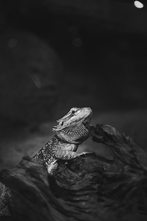 Reptile,Close Up,Darkness
