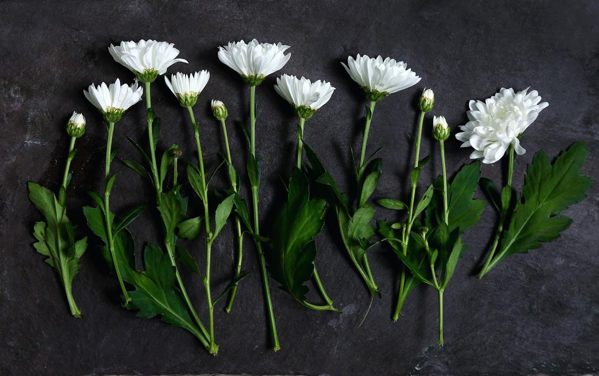 Plant,Flora,Still Life Photography