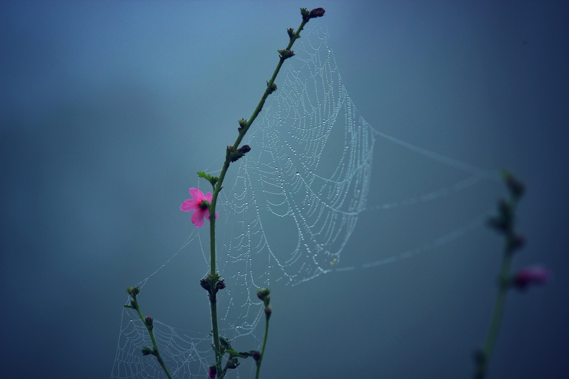 Plant,Spider Web,Branch