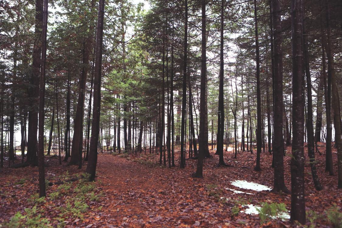 Biome,Plantation,Northern Hardwood Forest Concept
