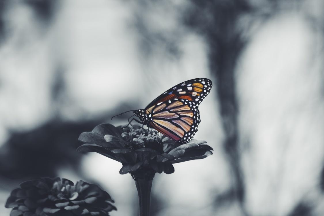 Butterfly,Macro Photography,Pollinator