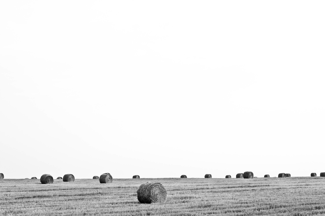 Grass Family,Hay,Monochrome Photography