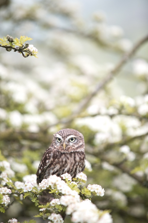 Owl,Wildlife,Tree