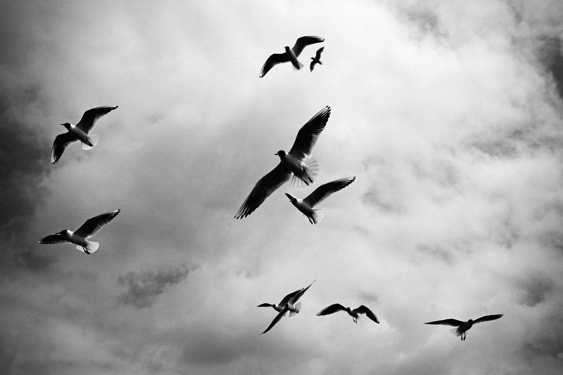 Atmosphere,Monochrome Photography,Sky