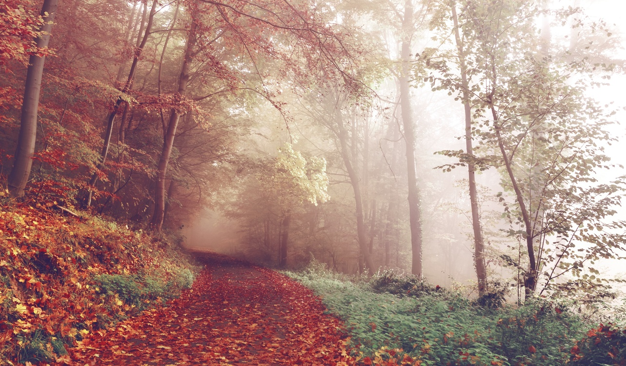 Temperate Broadleaf And Mixed Forest,Autumn,Mist