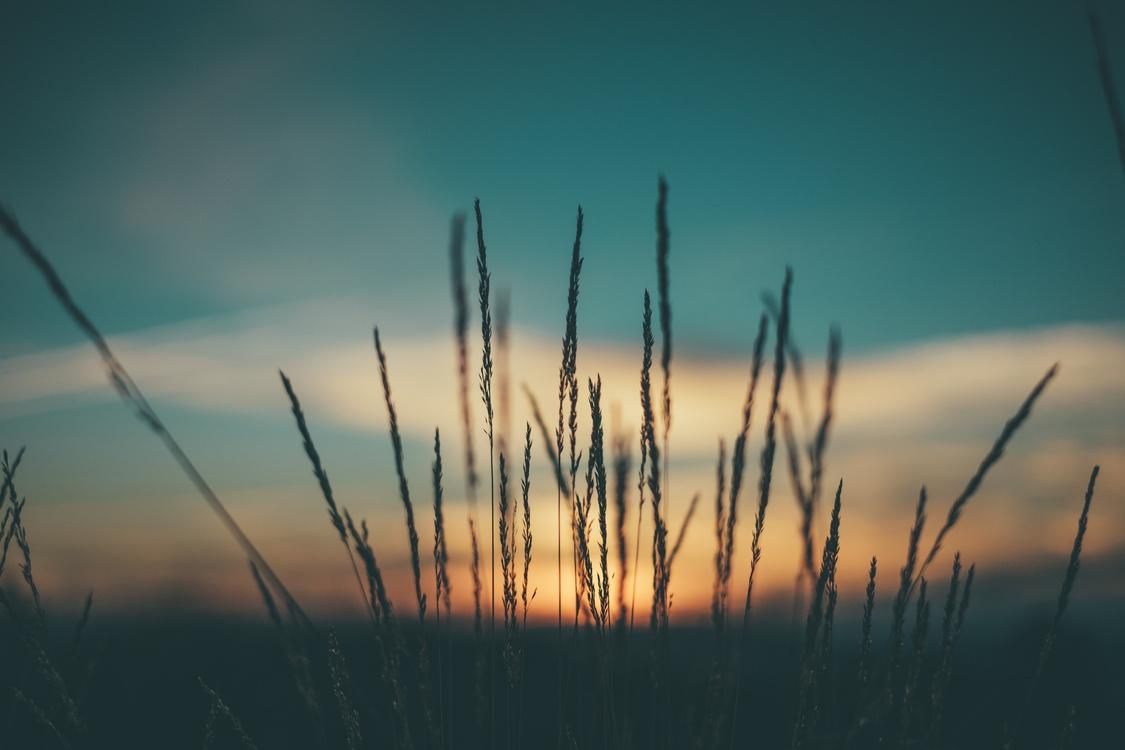 Atmosphere,Evening,Prairie
