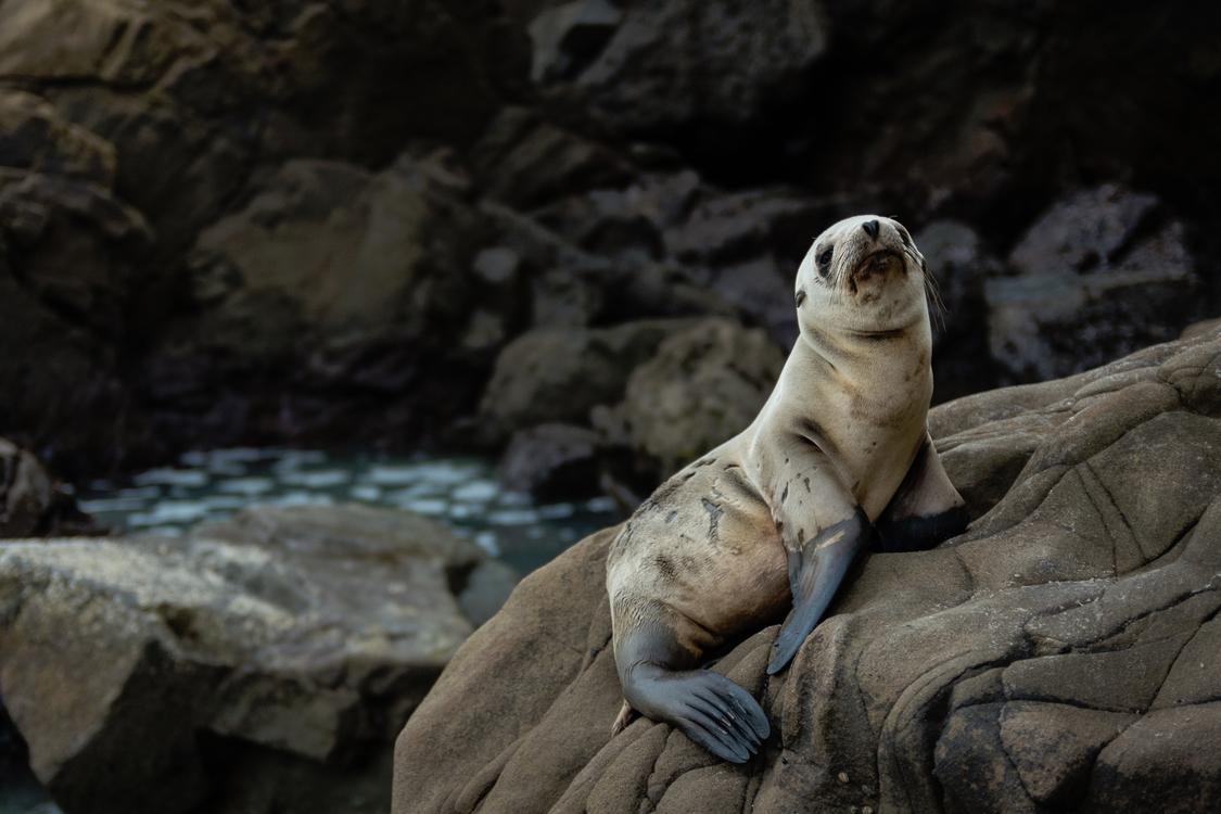 Wildlife,Terrestrial Animal,Marine Mammal