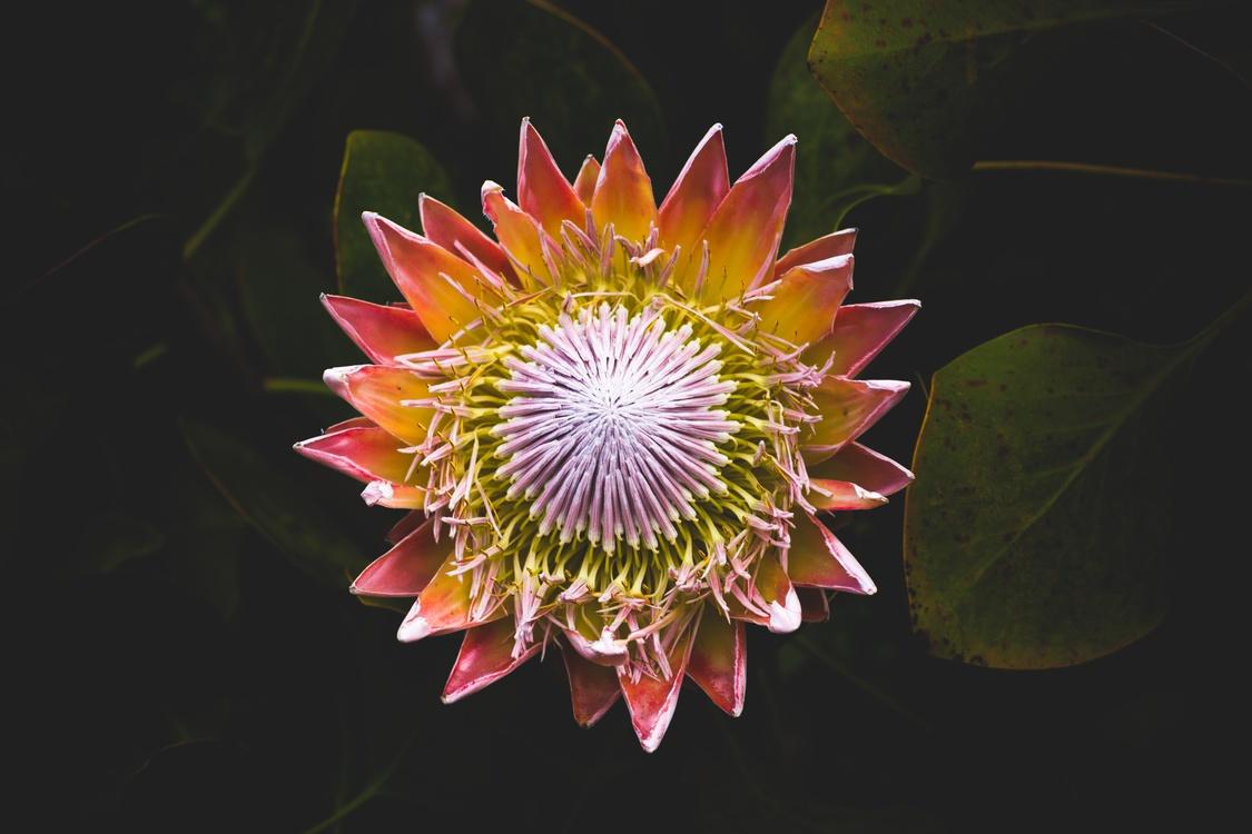 Pollen,Plant,Flora