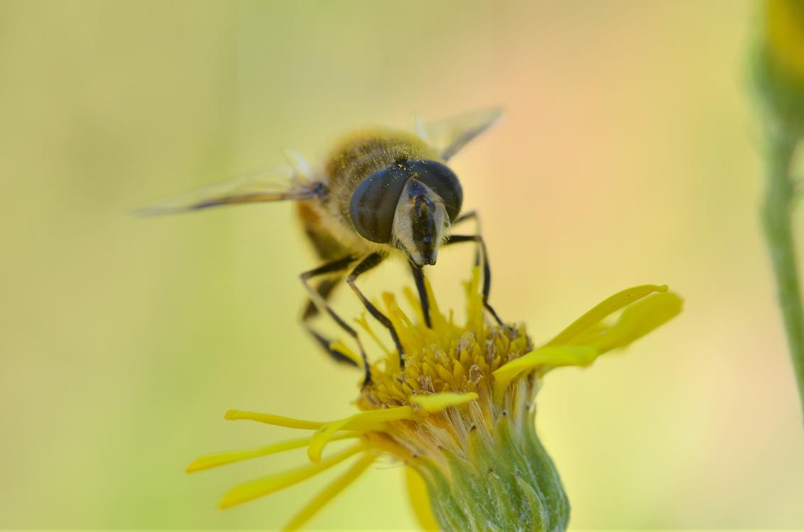 Pollen,Pollinator,Wildlife
