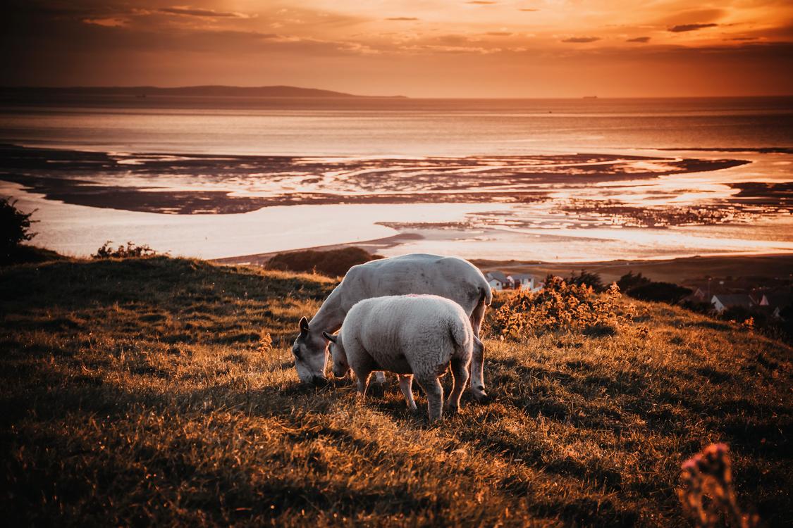 Wildlife,Evening,Sea