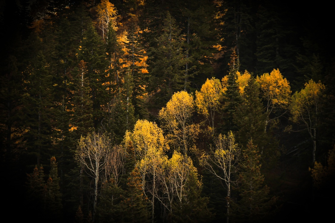 Into The Wild Nature Desktop Wallpaper Natural Environment