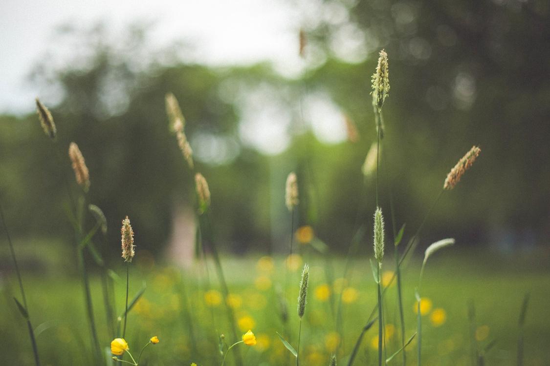 Computer Wallpaper,Grass Family,Flora