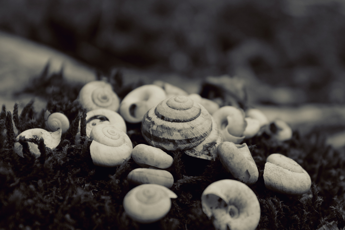Close Up,Monochrome Photography,Macro Photography