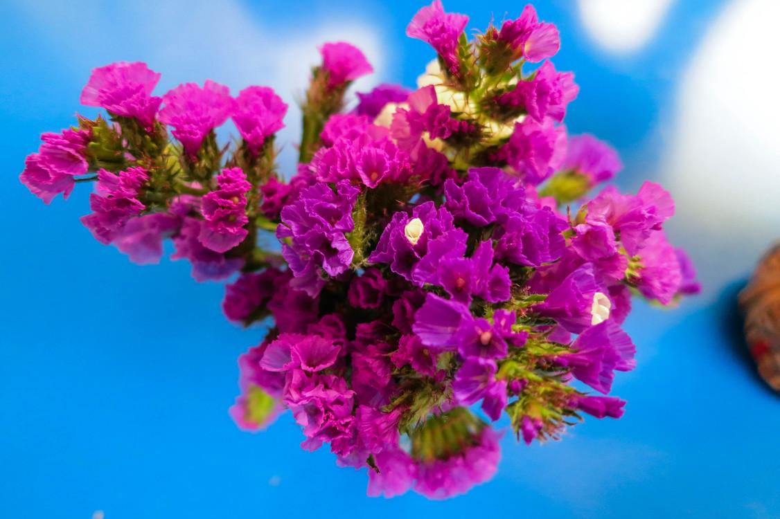 Violet Flower bouquet Color Cut flowers