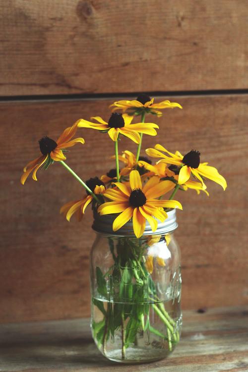 Petal,Plant,Flower