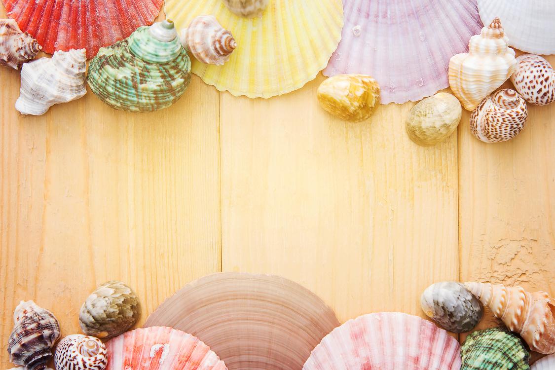 Seashell,Material,Beach