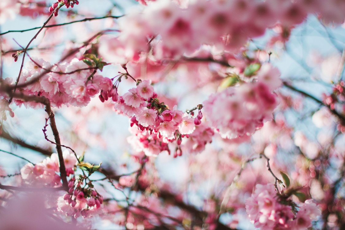 Pink,Plant,Flower