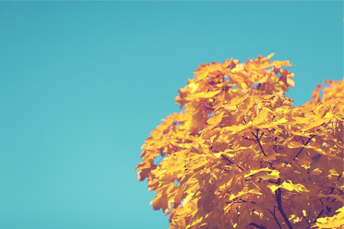 Computer Wallpaper Leaf Tree Background Royalty Free Photo Illustration