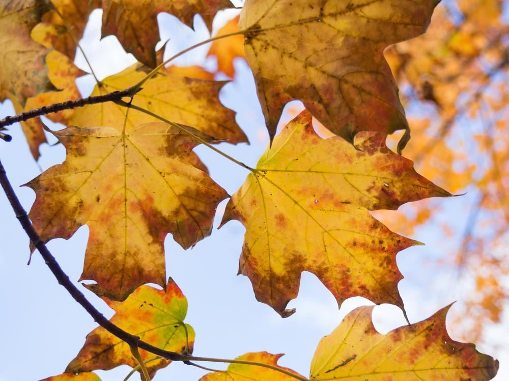 Twig,Leaf,Tree