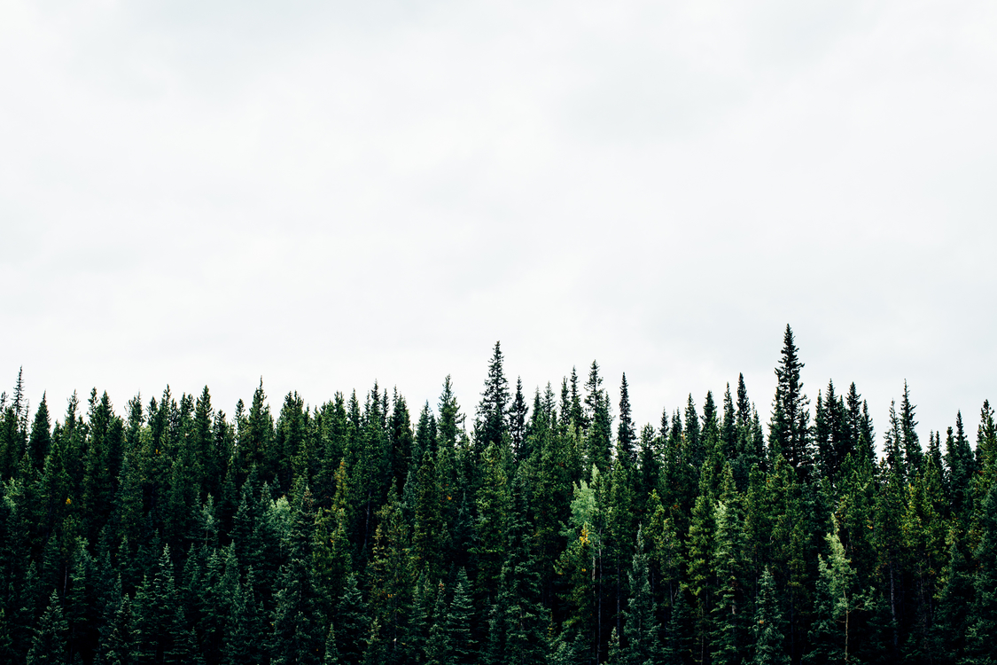 Mountain,Temperate Broadleaf And Mixed Forest,Spruce Fir Forest