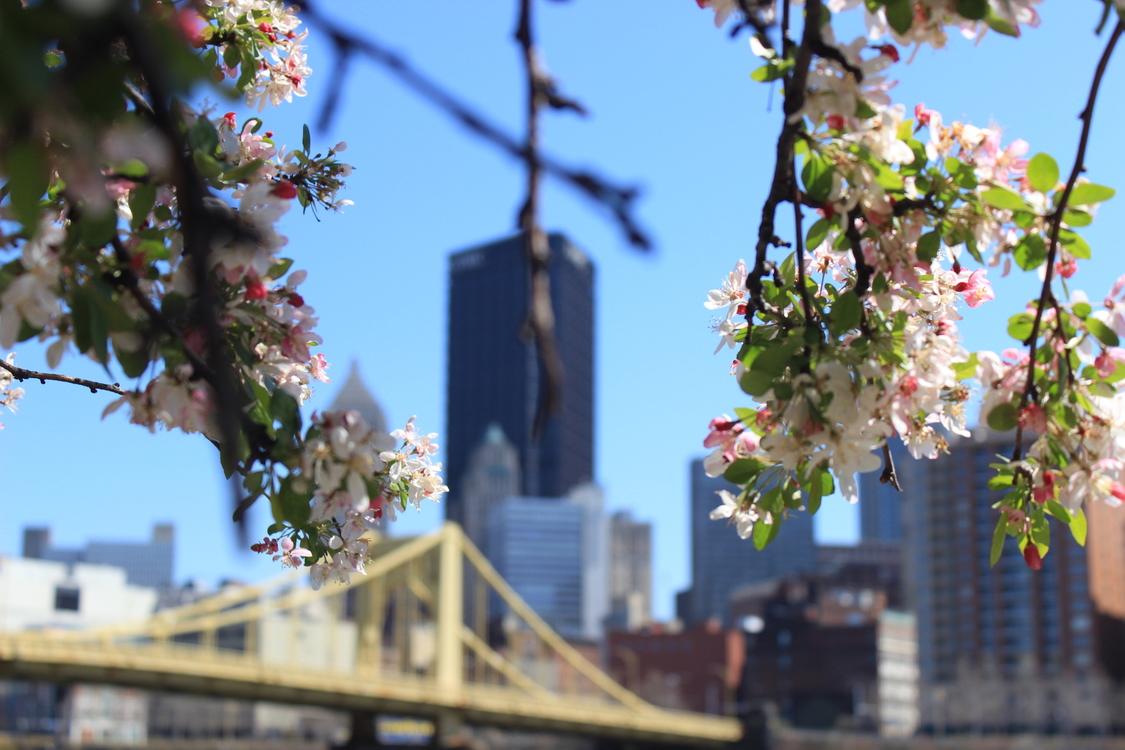City,Plant,Flower