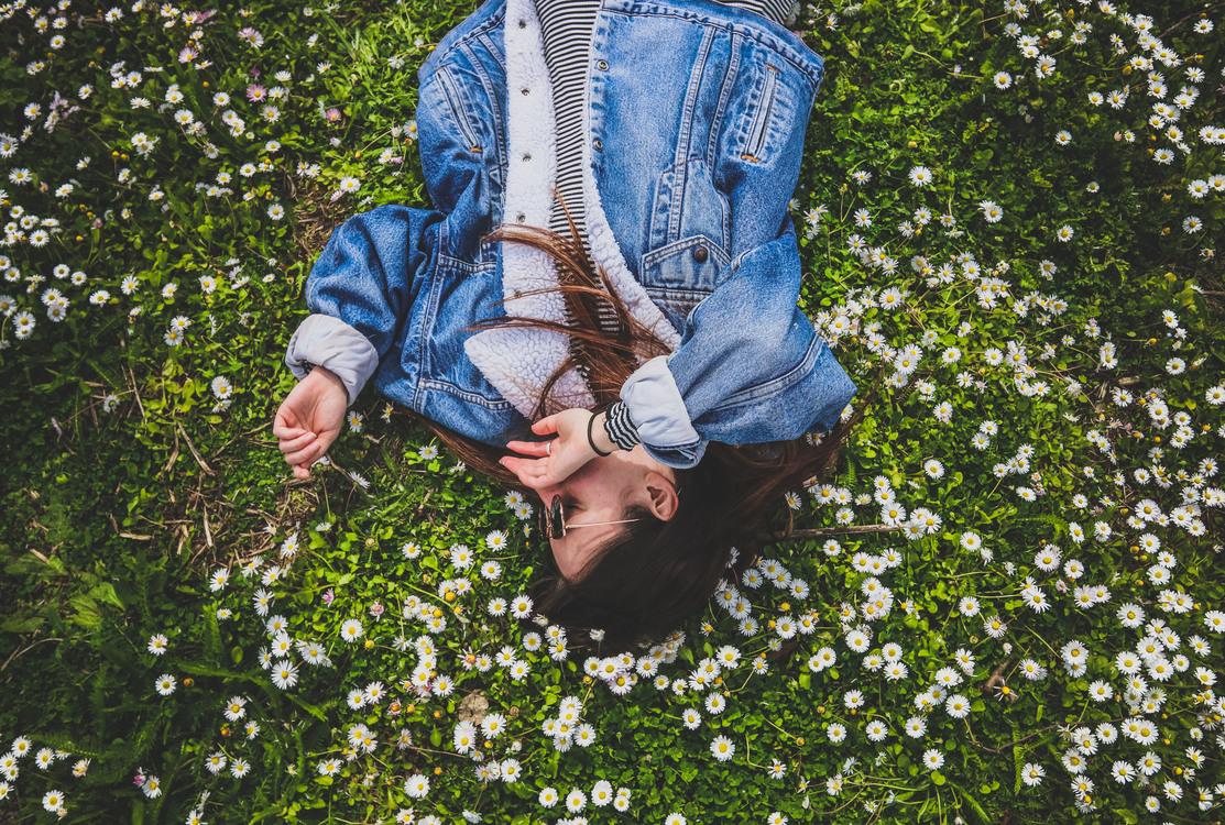 Lawn,Flower,Garden