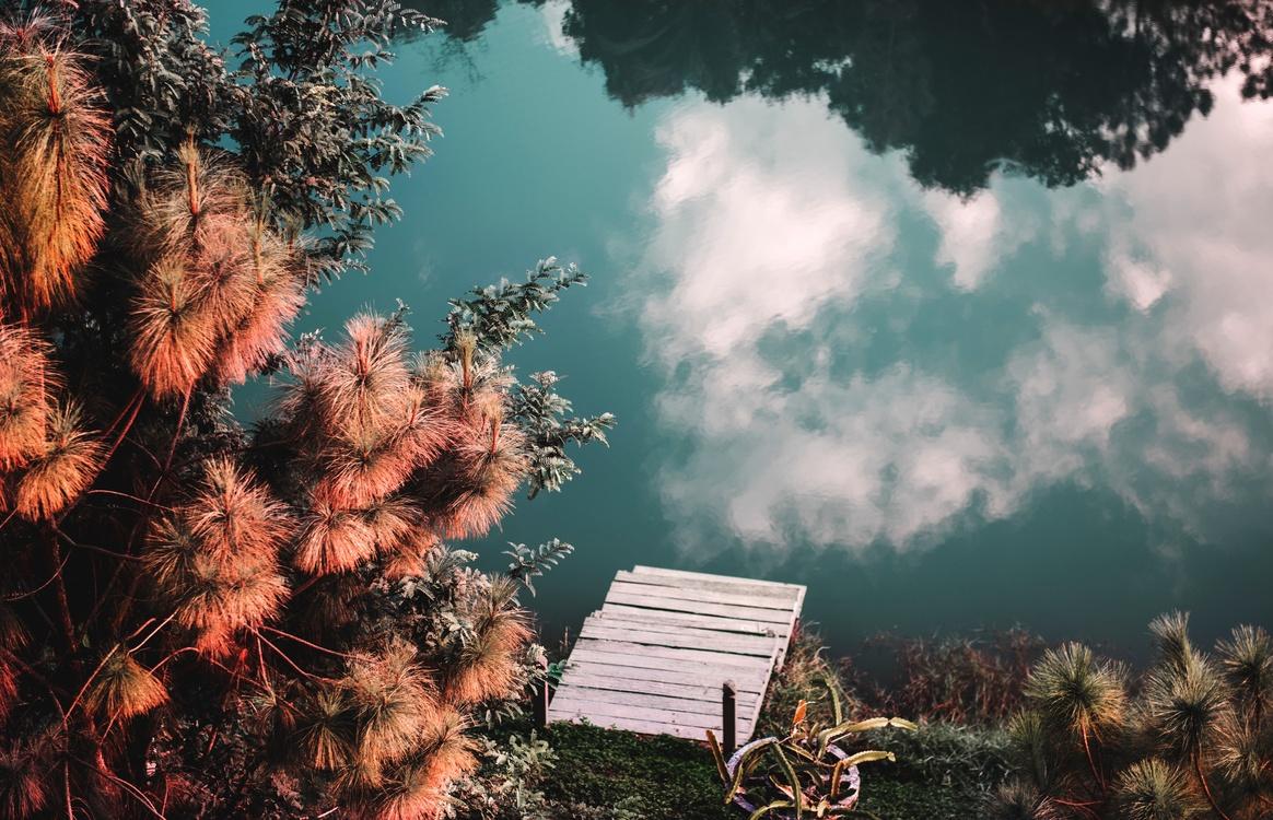Plant,Phenomenon,Nature