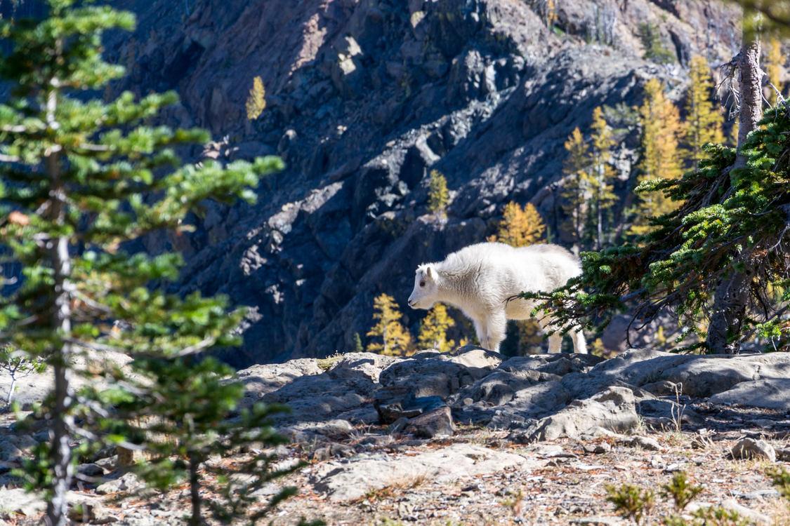Mountain,Wildlife,Livestock