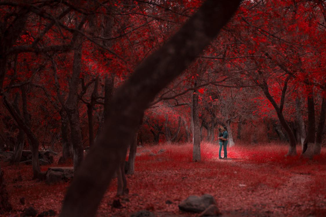 Autumn,Atmosphere,Evening