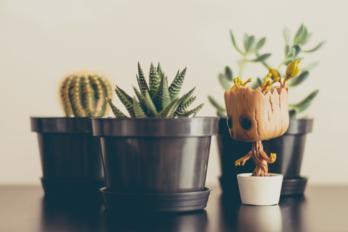 Plant,Flowerpot,Houseplant