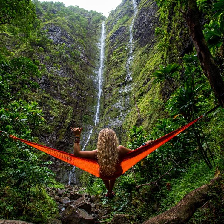 Valdivian Temperate Rain Forest,Wilderness,Nature Reserve