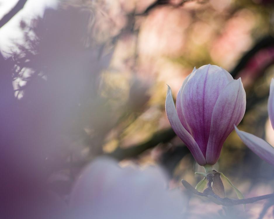 Spring,Violet,Twig