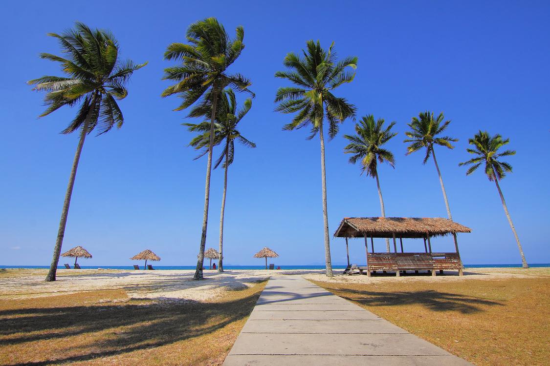 Tourism,Plant,Tropics