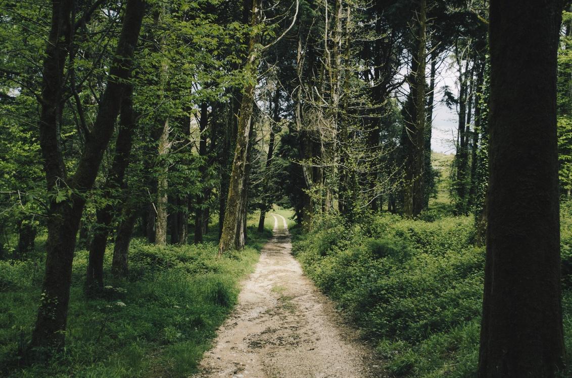 Valdivian Temperate Rain Forest,Wilderness,Spruce Fir Forest