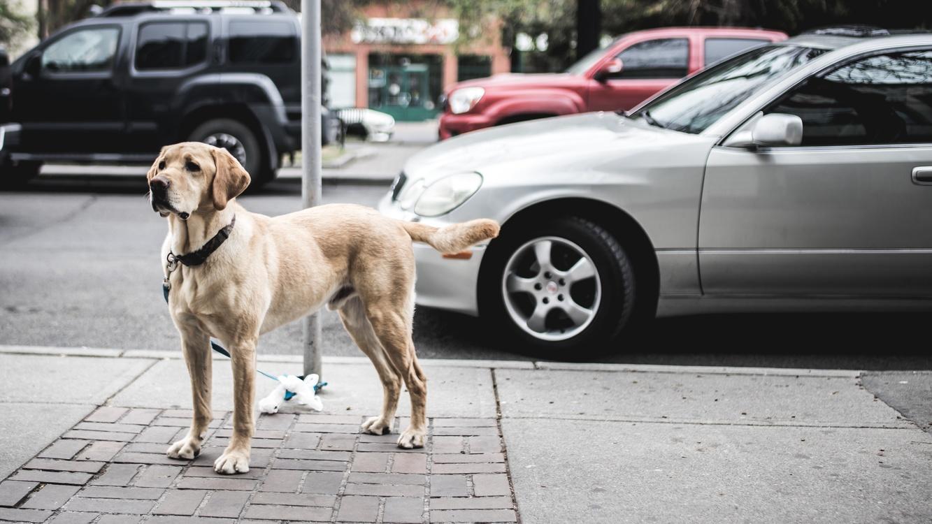 Family Car,Street Dog,City Car